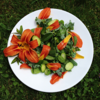 Daylily.in.salad.1