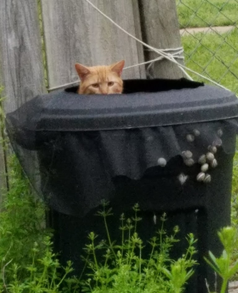 Garden.Cat.in.rainbarrel